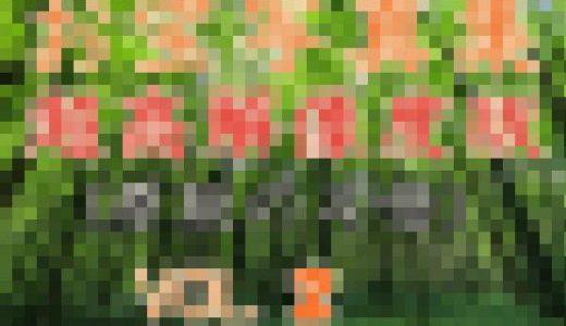 【超高解像度版】お宝写真集Vol.2 西村●香2冊セット