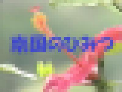 【IV】なんごくのひみつ